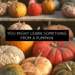 You might learn something from a pumpkin